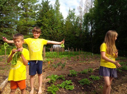 Check out the Camp Garden!